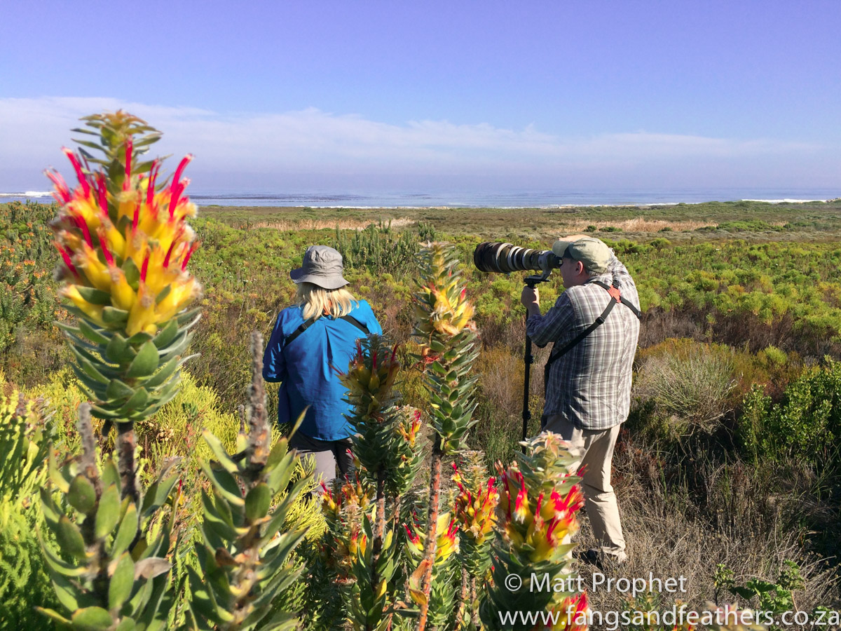Cape Town Birding Tours for locals